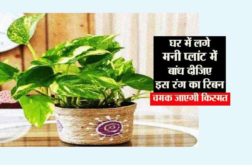 Money Plant : घर में लगे मनीप्लांट में बांध दीजिए इस रंग का रिबन,चमक जाएगी किस्मत