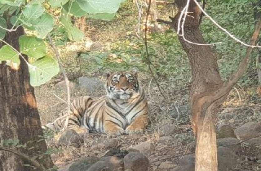 Mukundara HillsTiger Reserve shiftingby trunculizing Sultana Ranthambr