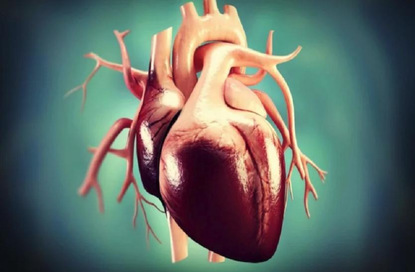 अब इस जानवर के दिल से धड़क सकेगा इंसानों का दिल, वैज्ञानिकों के इस प्रयोग से दुनिया हुई हैरान
