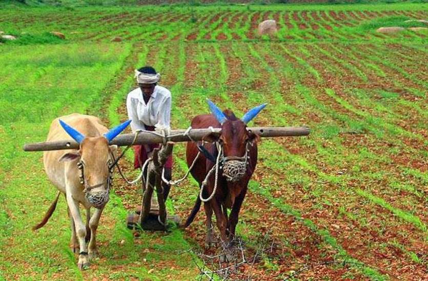 50 एकड़ में बनेगा खास पार्क, मालामाल होंगे मटर-सिंघाड़ा-टमाटर के किसान