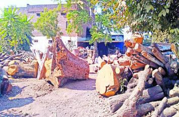 जंगलों में हो रही अवैध कटाई, आरा मशीनों से कर रहे चिराई