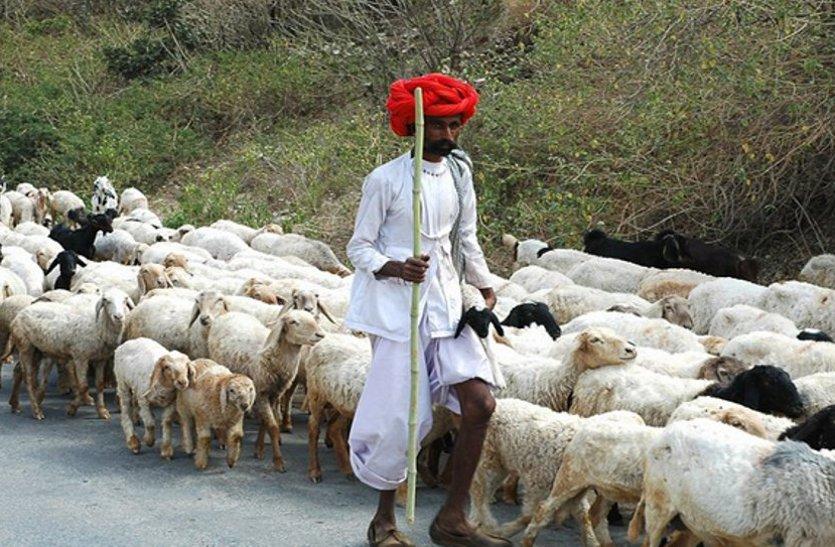 पति ने भेड़ों के बदले प्रेमी को सौंप दी पत्नी, ससुर ने वापस मांगी अपनी भेड़ तो एसएसपी का आया बयान