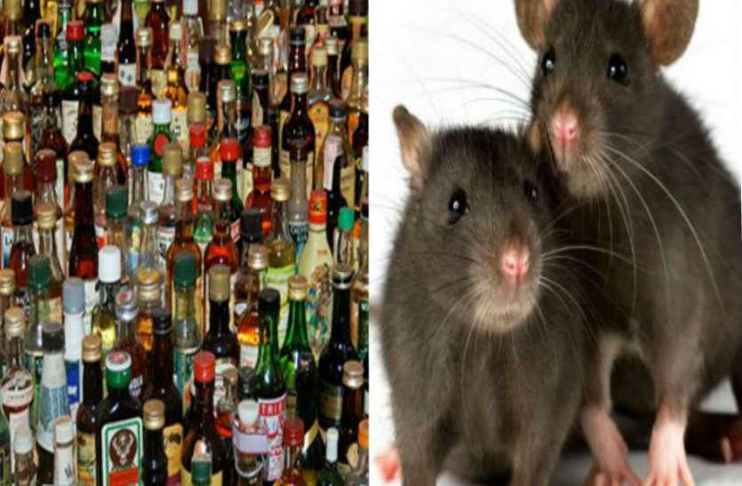 चूहे पी गए 700 लीटर शराब, ये मामला जानकर आपके होश उड़ जाएंगे