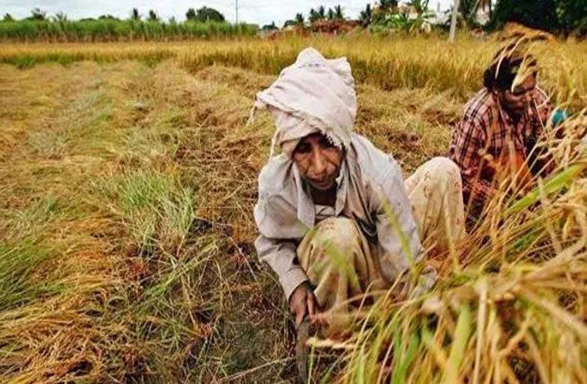 किसान को चाहिए कर्ज, सहकारी बैंकों ने रबी ऋण वितरण रोका, अन्नदाता हो रहे परेशान