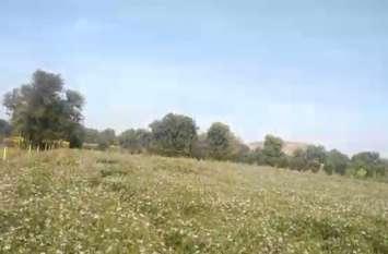 हल्की बूूंदाबांदी के बाद आसमान में बादलों की घेराबन्दी ने बढ़ाई किसानों की चिंता, ठिठुरन बढ़ी
