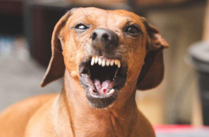 जरा बचकर खतरनाक हैं यहां के कुत्ते, हरदिन बना रहे 40 लोगों को शिकार