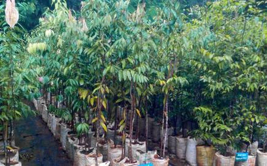 ...यहां हो रही औषधीय पौधों की खेती
