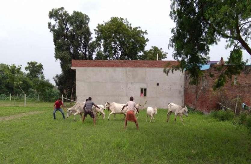 गाय के नाम पर जारी राजनीति से किसानोंं की बढ़ी ऐसी परेशानी कि योगी सरकार से कर दी यह बड़ी मांग