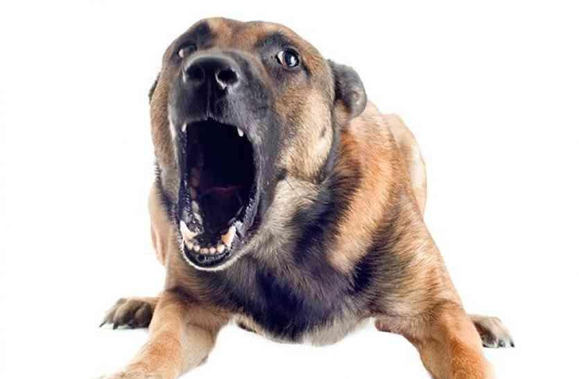 नपा कर्मचारियों ने कहा वन विभाग पकड़ता है कुत्ते, शहरवासी हो रहे परेशान