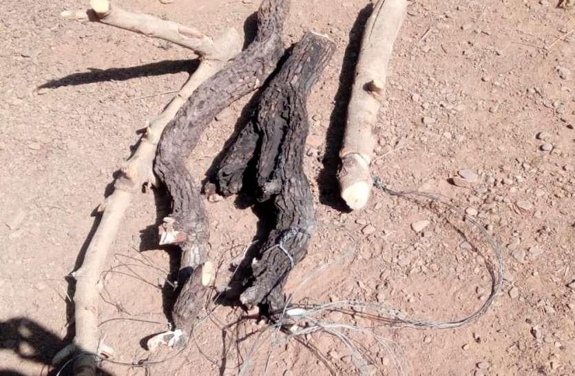 शिकार के लिए घात लगाए बैठा था शिकारी, वन विभाग की गिरफ्त में आया