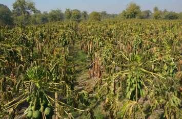 जीरो की जिद पर अड़ा पारा,गलन से बेहाल हुए लोग,फसलों में नुकसान करने लगी सर्दी