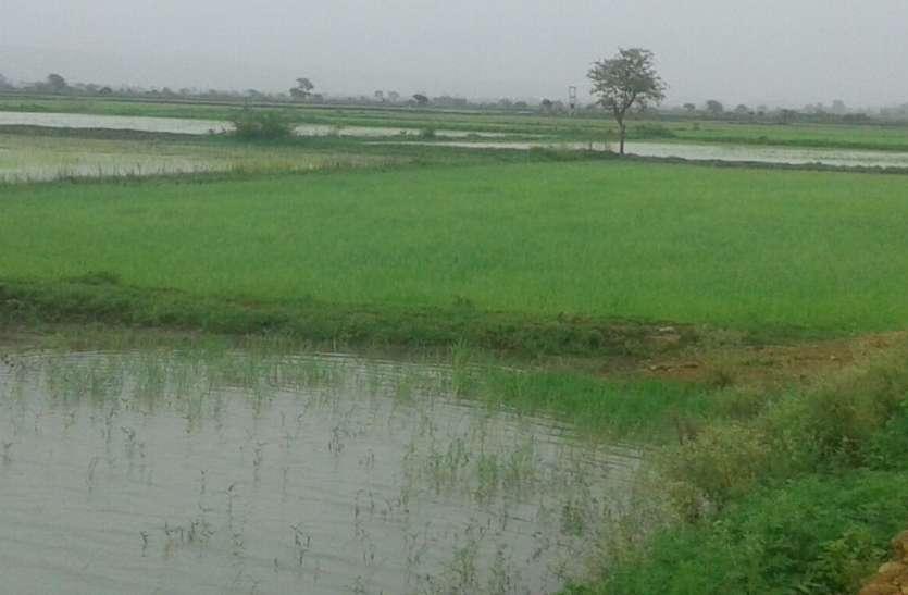 यहां हैं किसानों के सपनों के खेत, बिना खाद पानी के होती हैं भरपूर फसलें