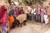 पशुओं में बढ़ रहा मौसमी बीमारी का प्रकोप, पशुचिकित्सा विभाग नहीं ले रहा बेजुबानों की सुध