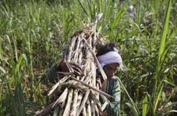 गन्ना किसानों का बकाया नहीं देने पर चीनी मिलों पर मुकदमा