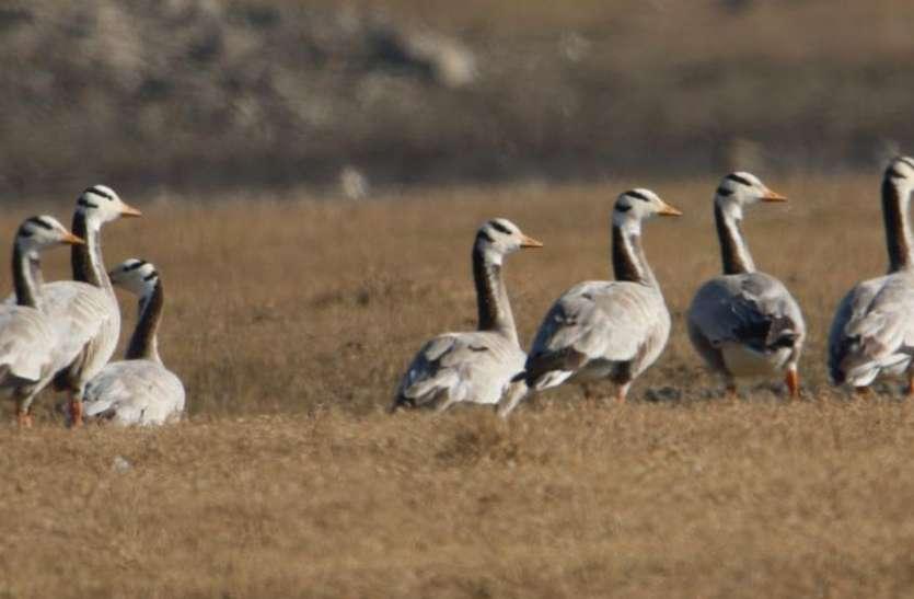 पक्षी गणना पूरी, 60 से अधिक प्रजाति के दिखे पक्षी