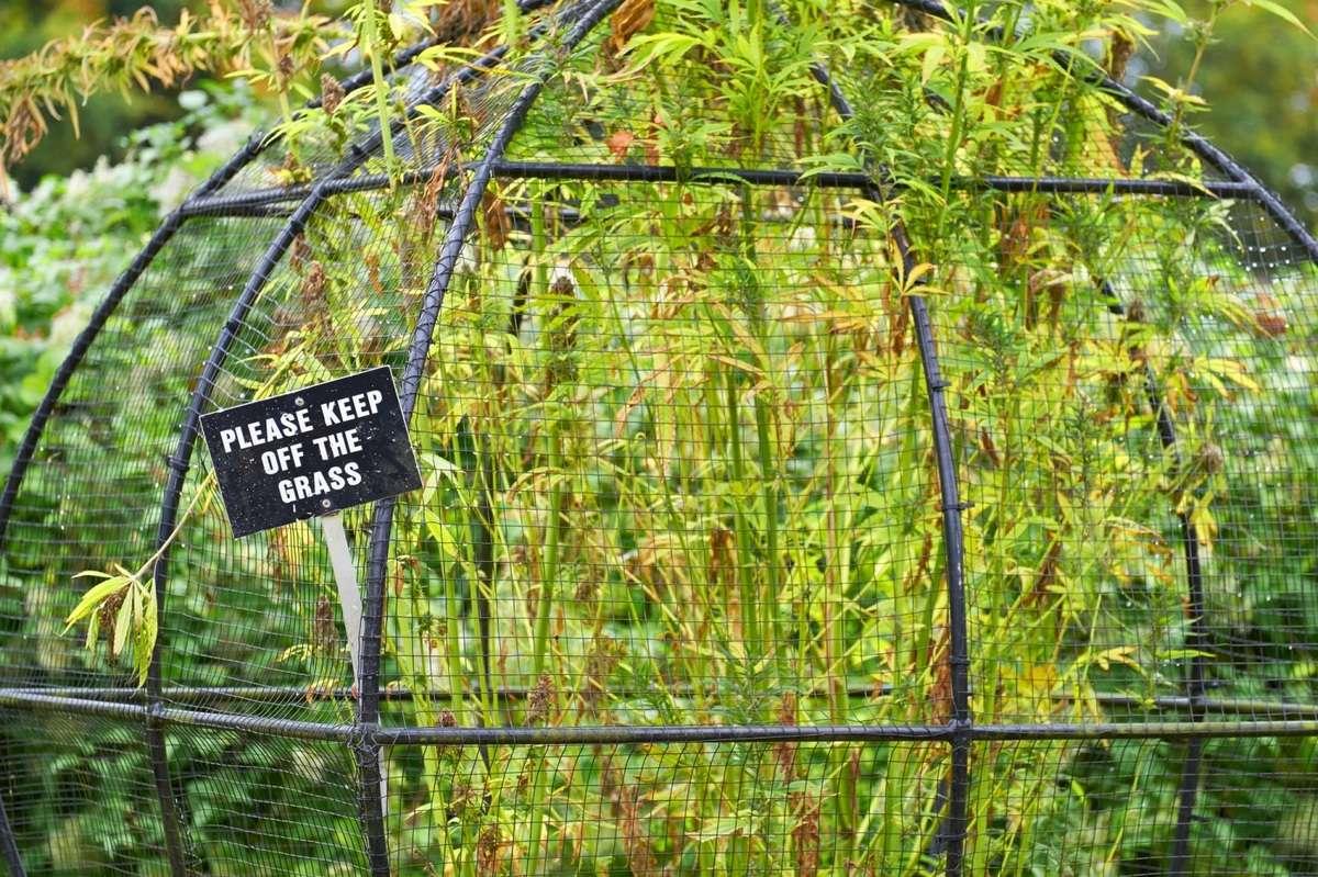 Alnwick Poison Garden in England