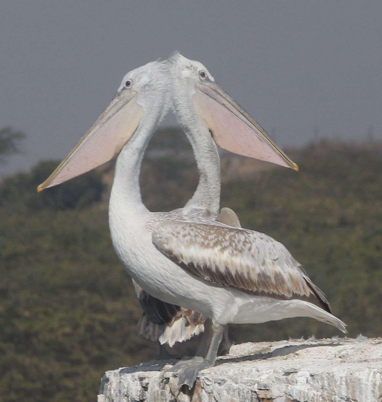 beautiful pics of birds
