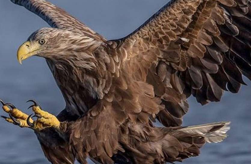 National Eagle Save Day: डाइक्लोफेनेक सोडियम नामक कीटनाशक दवाओं से घट रही बाज की संख्या