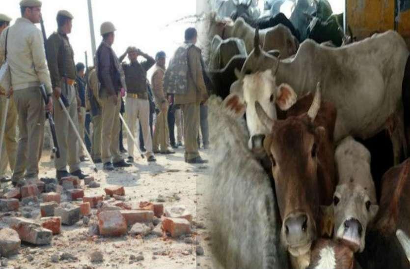 स्कूल और अस्पताल में बंद गोवंश को मुक्त कराने पहुंचे पुलिसकर्मियों को ग्रामीणों ने दौड़ाया, पथराव