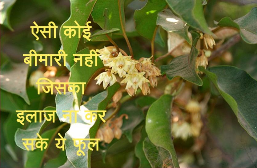 ऐसी कोई बीमारी नहीं जिसका इलाज ना कर सके ये फूल, जानिए इसके फायदे