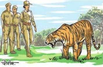 इसे कहते हैं हौंसला...बाघ को सामने देख महिला वनकर्मी बनी लेडी टाइगर, हौंसला देख बाघ को भी माननी पड़ी हार