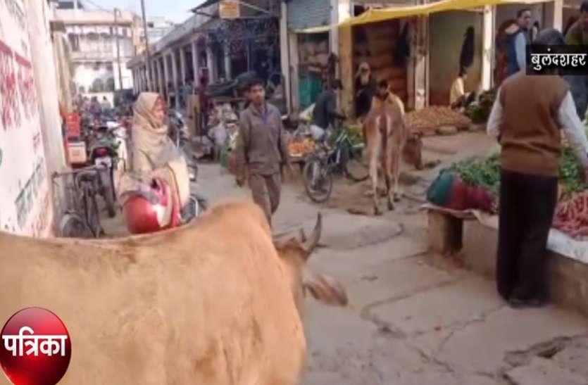 पत्रिका ग्राउंड रिपोर्टः योगी सरकार की पहल के बाद भी सड़कों आैर खेतों में खुले घूम रहे गोवंश, देखें वीडियो-
