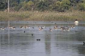11 जलाशयों पर दिखे सवा सात हजार जलीय पक्षी