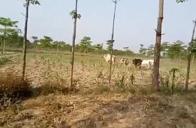 पशुओं से परेशान है किसान, अब योगी सरकार की नीति करेगी किसान का भला