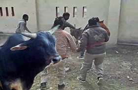 बस्ती में छुट्टा पशुओं को पकड़ने का अभियान शुरू, मनरेगा के माध्यम से बनेंगे गो संरक्षण केन्द्र