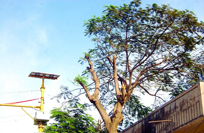 इंजीनियर का तर्क, पेड़ की छांंव ने बंद करा दिए ट्रैफिक सिंग्नल