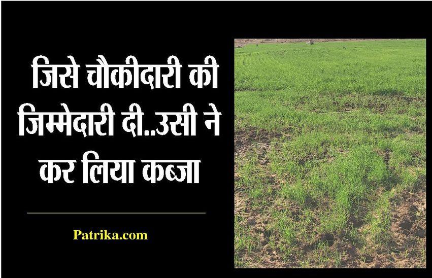 जंगल की सुरक्षा को रखे चौकीदार ने जमीन पर कब्जा कर 8 बीघा में कर दी बुवाई...