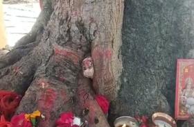 पीपल के पेड़ की जड़ से प्रकट हुई देवी मां की मूर्ति, चमत्कार समझ लोगों ने शुरू की पूजा