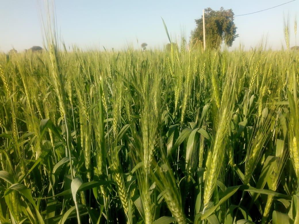 कमलनाथ सरकार शिवराज की ड्रीम योजना भावांतर को करेगी बंद