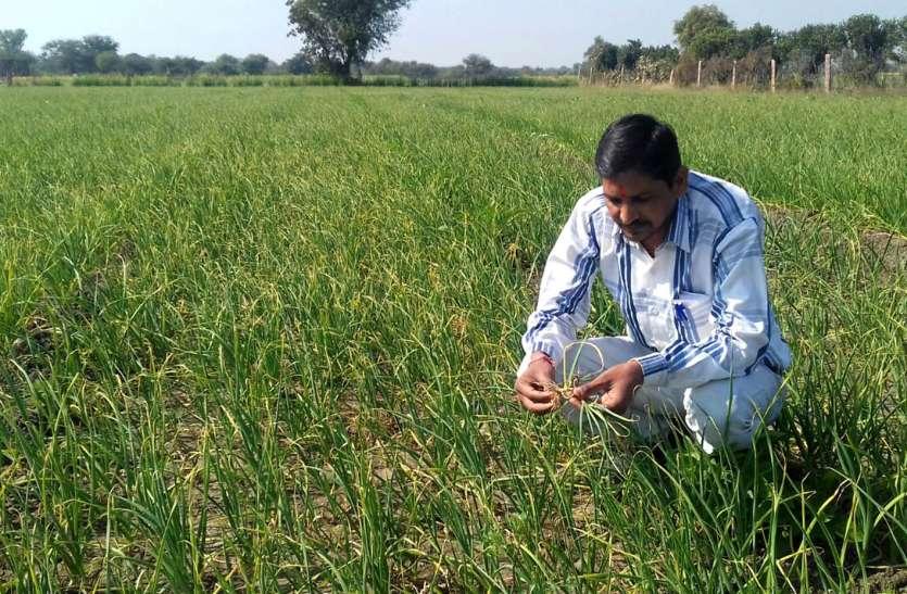 कृषि वैज्ञानिकों ने दी किसानों को यह सलाह, आप भी जानें