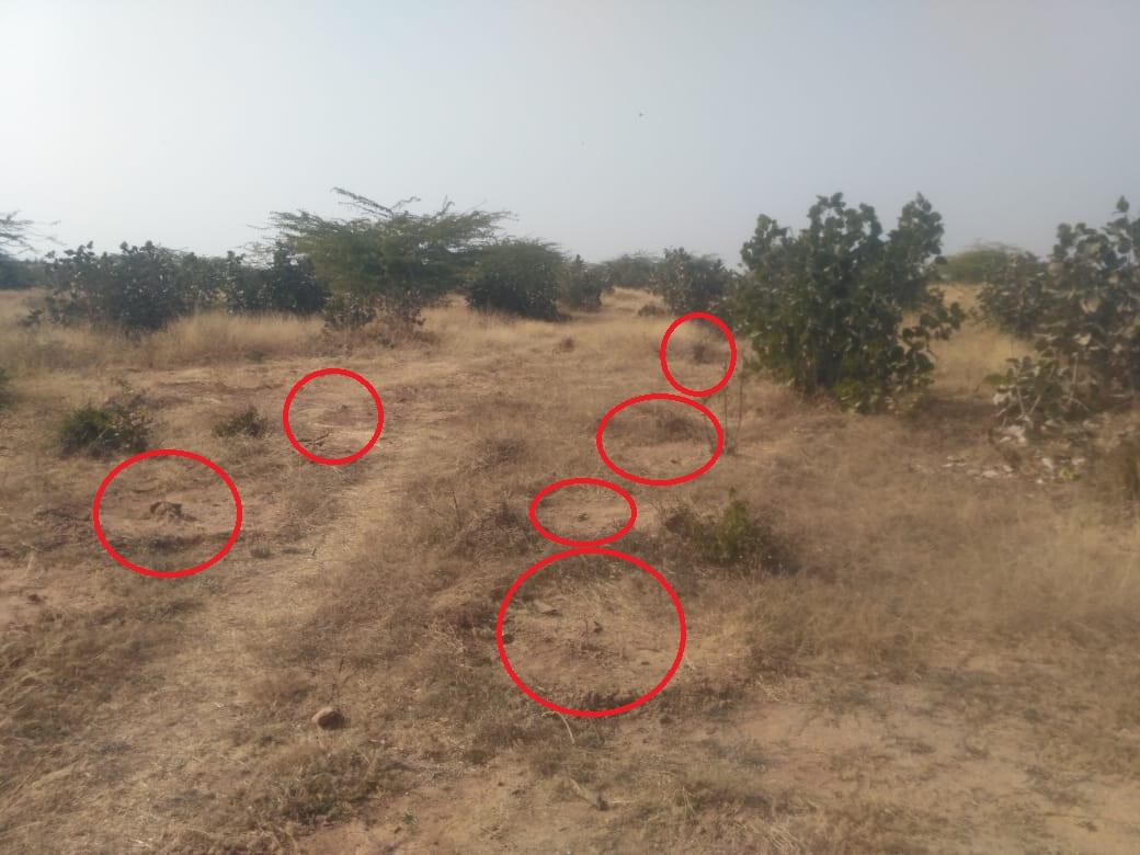 जिले में लगाए गए ७ लाख से अधिक पौधे, फिर भी खाली पड़े मैदान