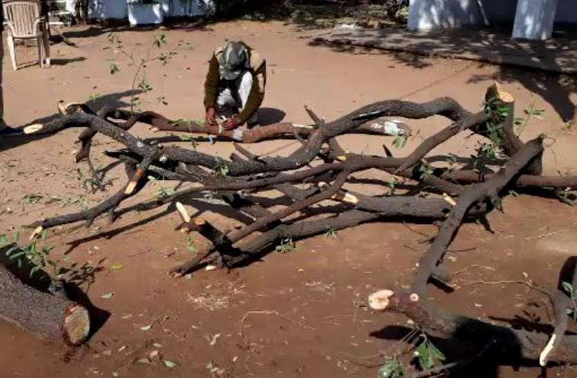 चौकीदार को डरा-धमकाकर बेशकीमती चंदन के पेड़ काट ले गए चोर