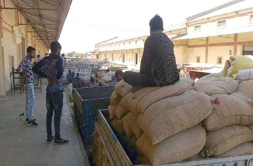 अनाज खरीदी का लक्ष्य १30 लाख टन, गोदामों में जगह महज 40 लाख टन की