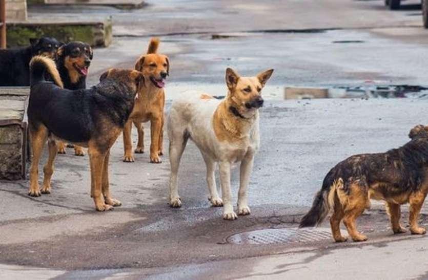 कुत्तों ने नोच डाले मासूम के हाथ-पैर