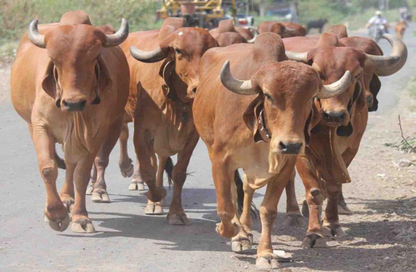 श्योपुर में बनने वाले गिर ब्रीडिंग सेंटर को लेकर आई बड़ी खबर, जानिए