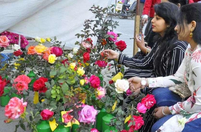 गुलाब प्रदर्शनी