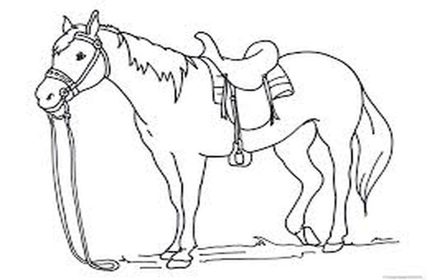 बंदोली में बिदका घोड़ा, दुल्हन लेकर दौड़ा, गाड़ी से टकरा कर गिरा, दुल्हन घायल