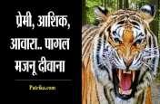 आखिर ऐसा क्या हुआ कि बाघ छोड़ आया रणथंभोर से अपना घर...