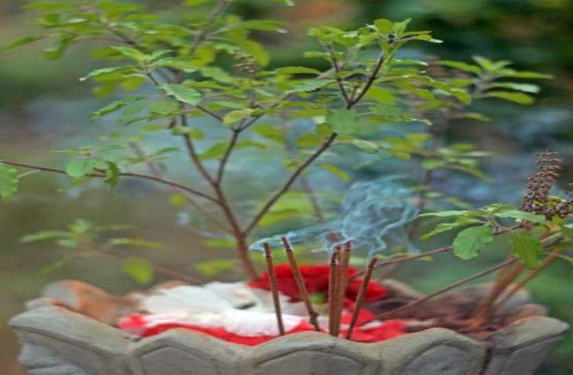 धन की कमी को दूर करता है तुलसी का पौधा, घर की इस दिशा में रखना रहेगा लाभकारी