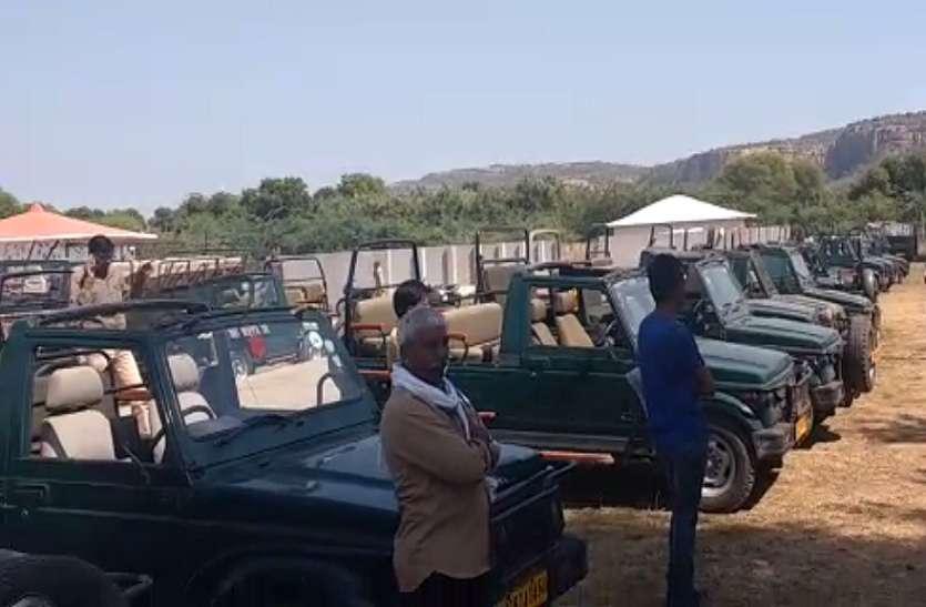 VIDEO: रणथम्भौर राष्ट्रीय उद्यान के वन विभाग ने पर्यटन वाहनों का प्रवेश किया बंद