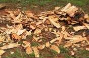 पन्ना में चंदन के पेड़ों की कटाई