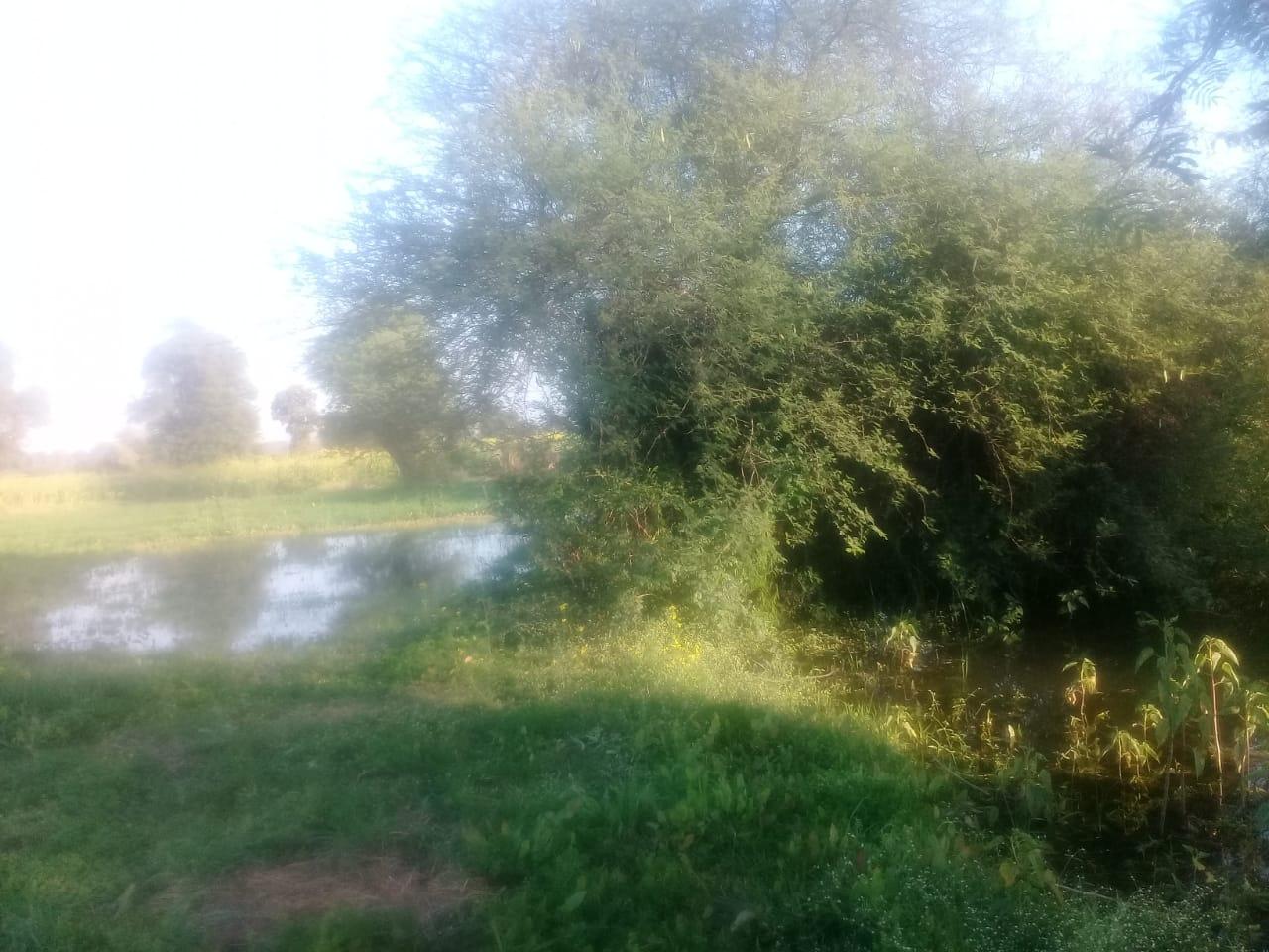 नाले में छोड़ दिया नहर का पानी, सौ एकड़ में खड़ी गेहूं फसल बर्बाद