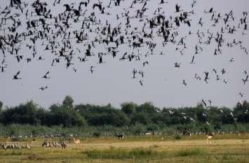 मारवाड़ में सतरंगी पक्षियों का महाकुंभ