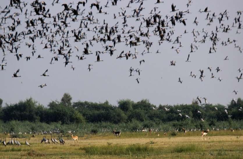 पक्षी दर्शन करने बर्ड विलेज मेनार पहुँचा दल
