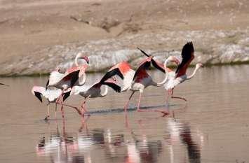पक्षियों की अठखेलियों को किया कैमरों में कैद