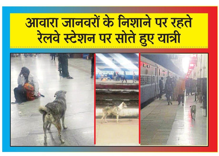 ए श्रेणी के स्टेशन पर आवारा जानवर, गंदगी और असुरक्षित यात्री